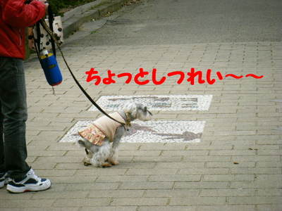 2010_03310053