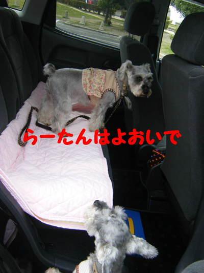 2010_03310059