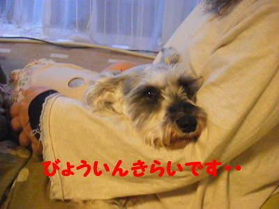 2010_04020001