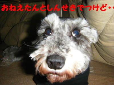 2010_04110058