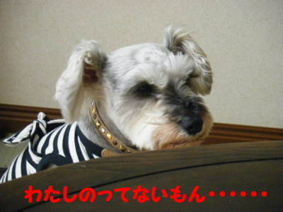 2010_04190011