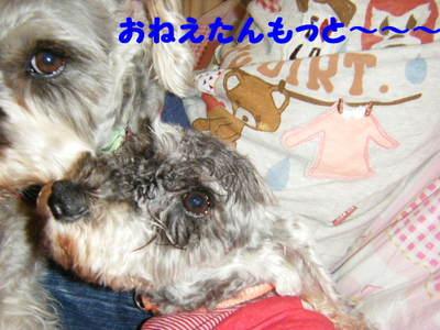 2010_05070015