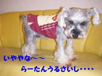 2010_06010021