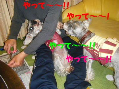 2010_06010024