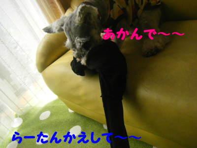 2010_06090040