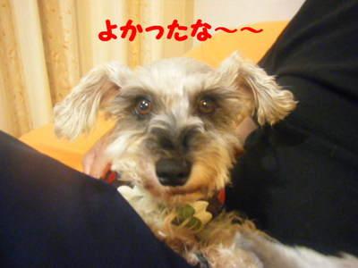 2010_06150022