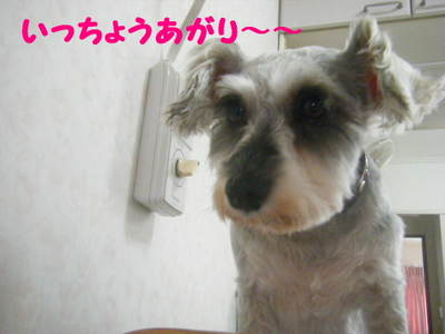 2010_09140013
