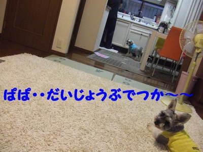 2010_10040026