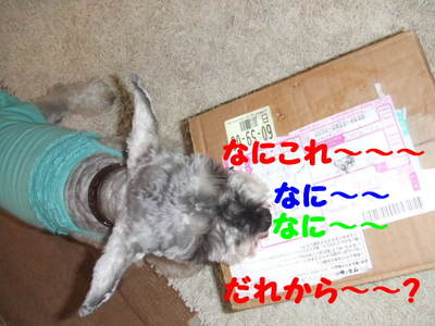 2010_10170031