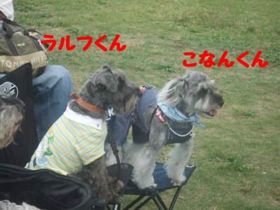 2010_10240059