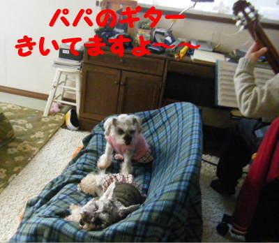 2010_12180001