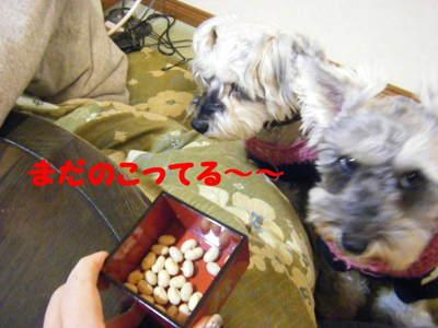 2011_02040011