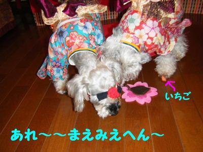 2011_03030030