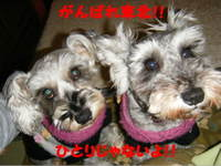2011_03070001