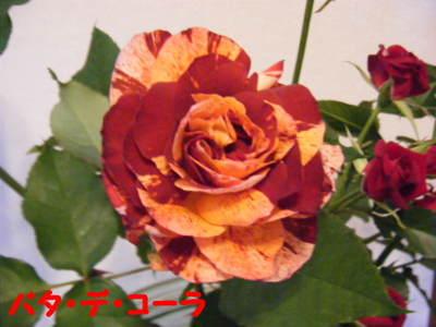 2011_03310019