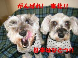 2011_03230013