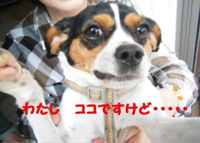 2011_04280017