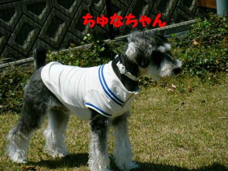 2011_04290116