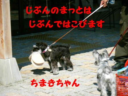 2011_04290148