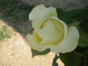 2011_05190025