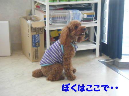 2011_05250042
