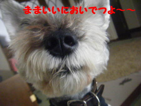 2011_05250057