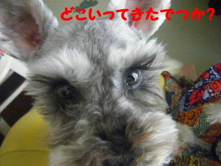 2011_05250058