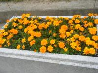 2011_05260006