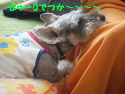 2011_06090003