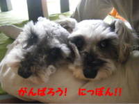 2011_06070021