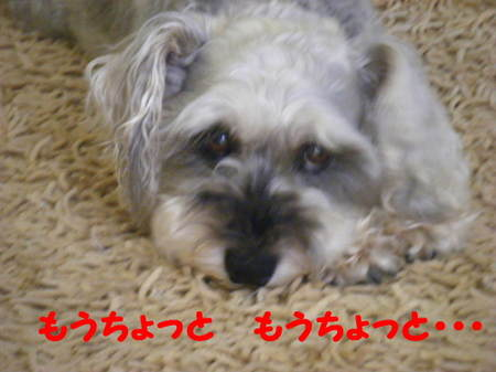 2011_07050018