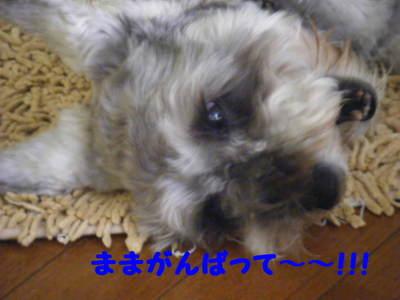 2011_07050027