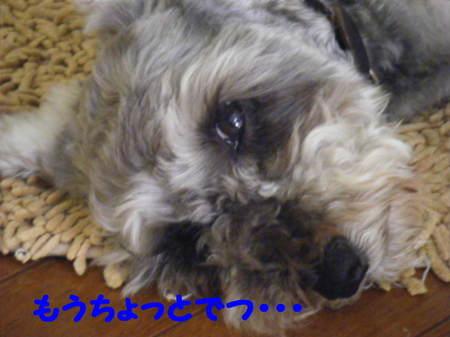 2011_07050030