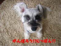 2011_06150002