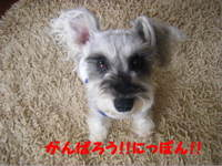 2011_06150002_2