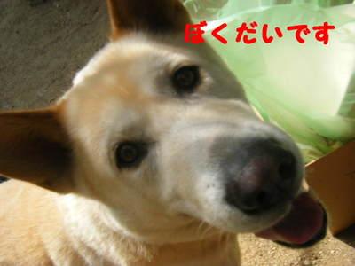 2011_07310015
