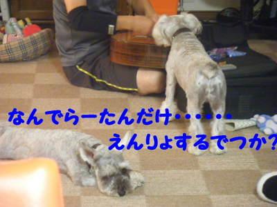 2011_08180011