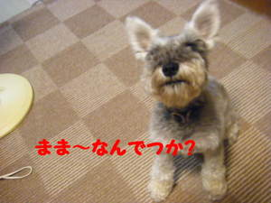 2011_09040001