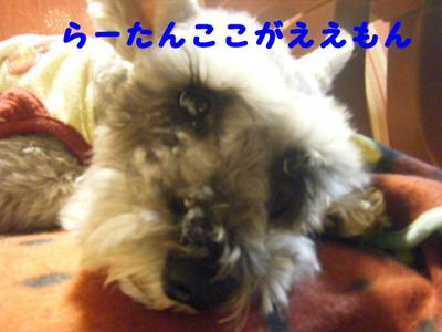 2011_11070021