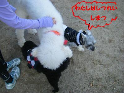 2011_11260042