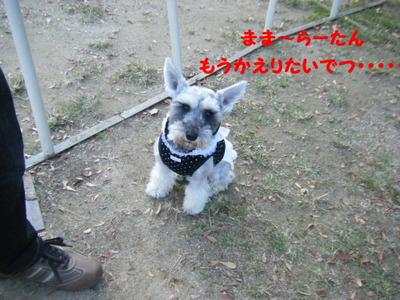 2011_11260052