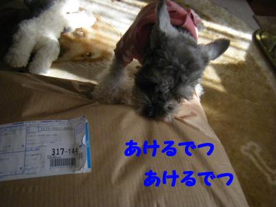 2011_12130009