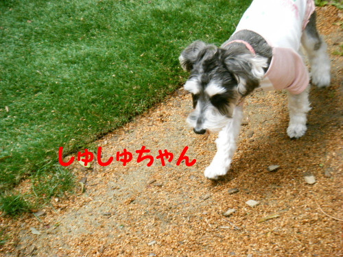 2012_04070049_10