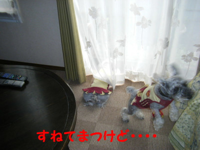 2012_05110021_3