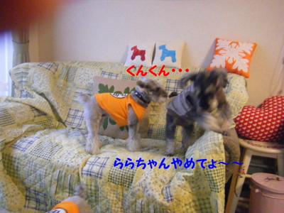2012_05300015