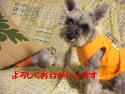2012_06020049_2