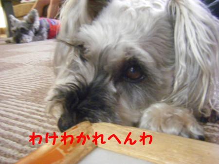 2012_07250023_2