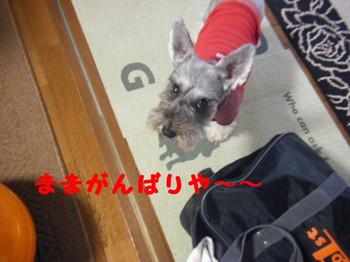 2014_11300032