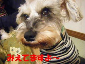 2009_010720060310kara0014