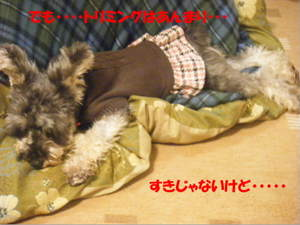 2009_020920060310kara0027_4